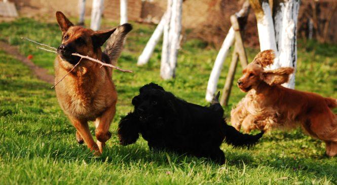 Nákup krmiva pro psy: Ne každé je kvalitní