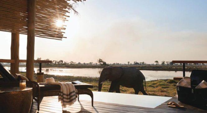 Safari v Africe: Zažijte dobrodružství v divoké africké přírodě